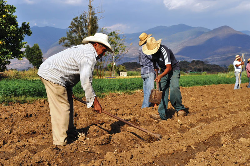 Alice Stafford Planting amaranth in San Isidro.