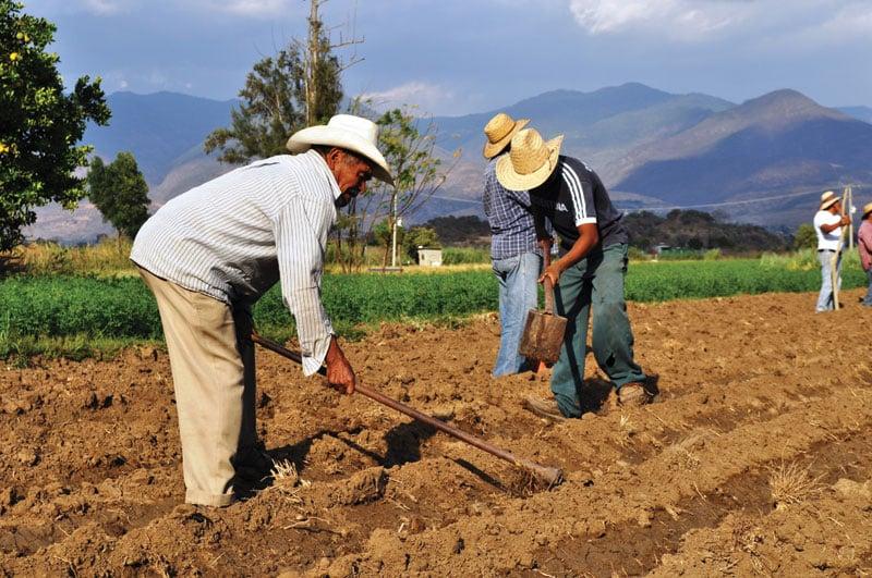 Planting amaranth in San Isidro.