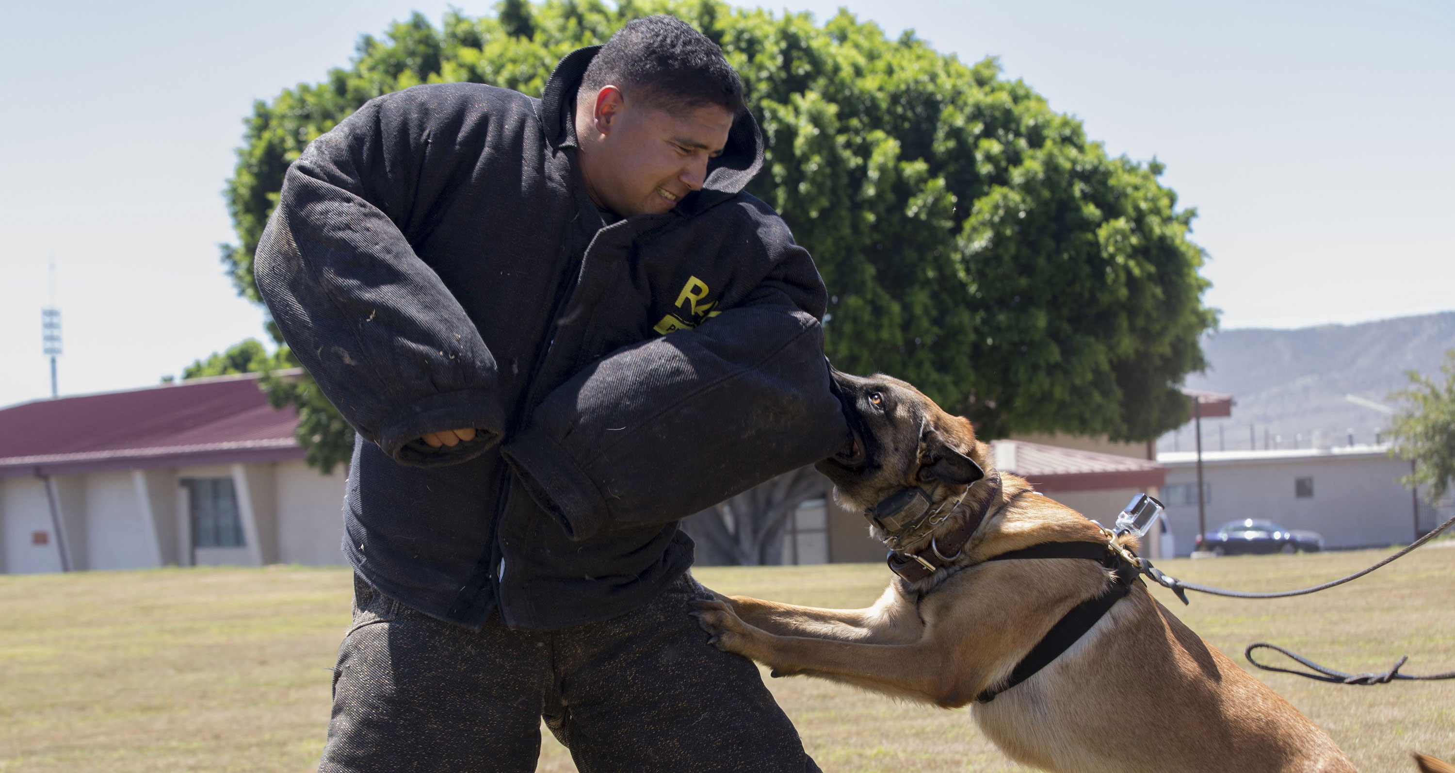 A military handler wears a Ray Allen dog trainer bite suit. The suit Donnelly wore weighed 75 pounds. TDCJ did not provide details on Donnelly's suit.