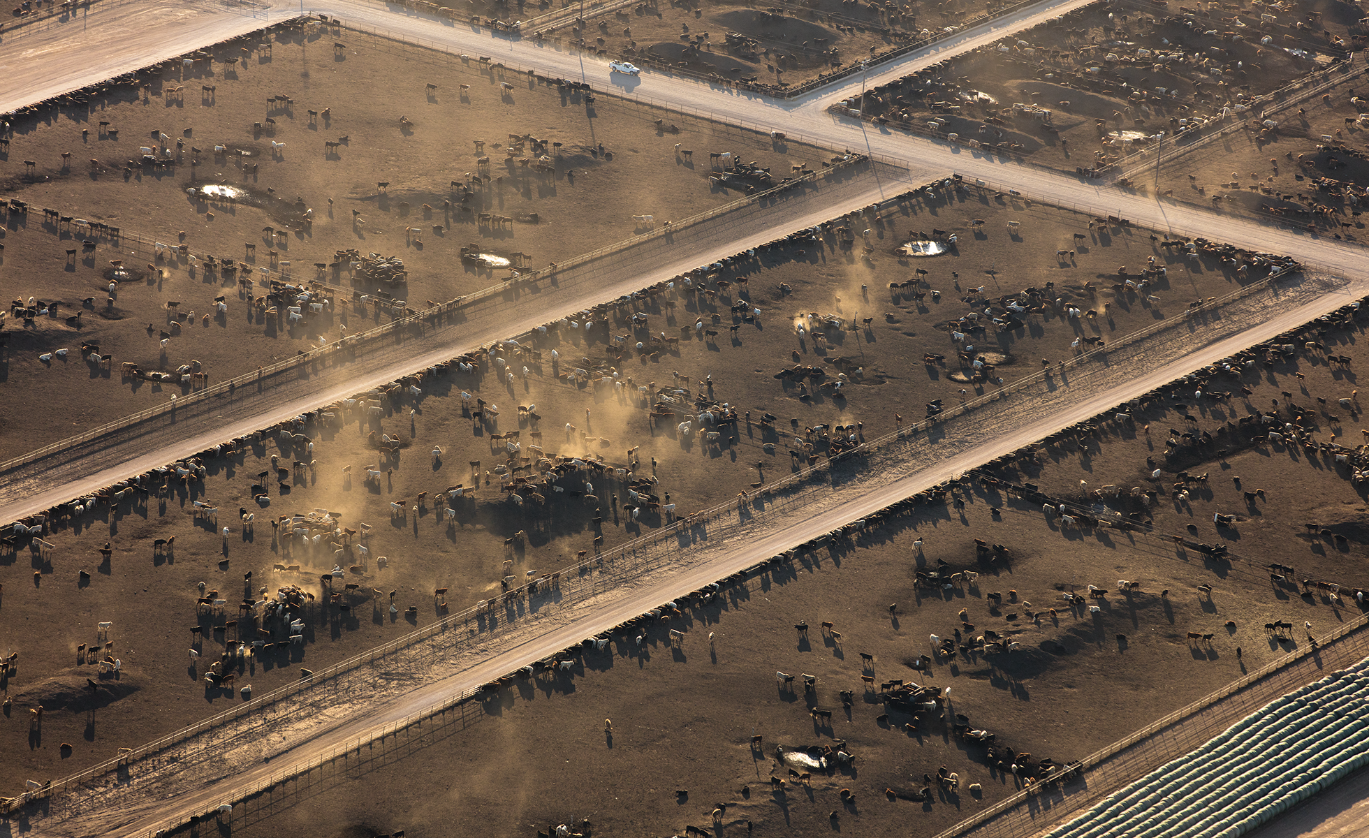 Bar-G Feedyard near Summerfield is part of a vast constellation of feedlots that dot the western Panhandle.