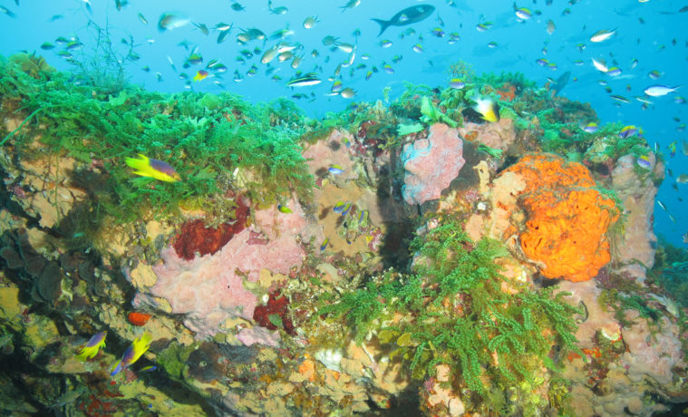 Colorful sponges and bright green algae adorn the cap of Bright Bank, near the Flower Garden Banks National Marine Sanctuary.